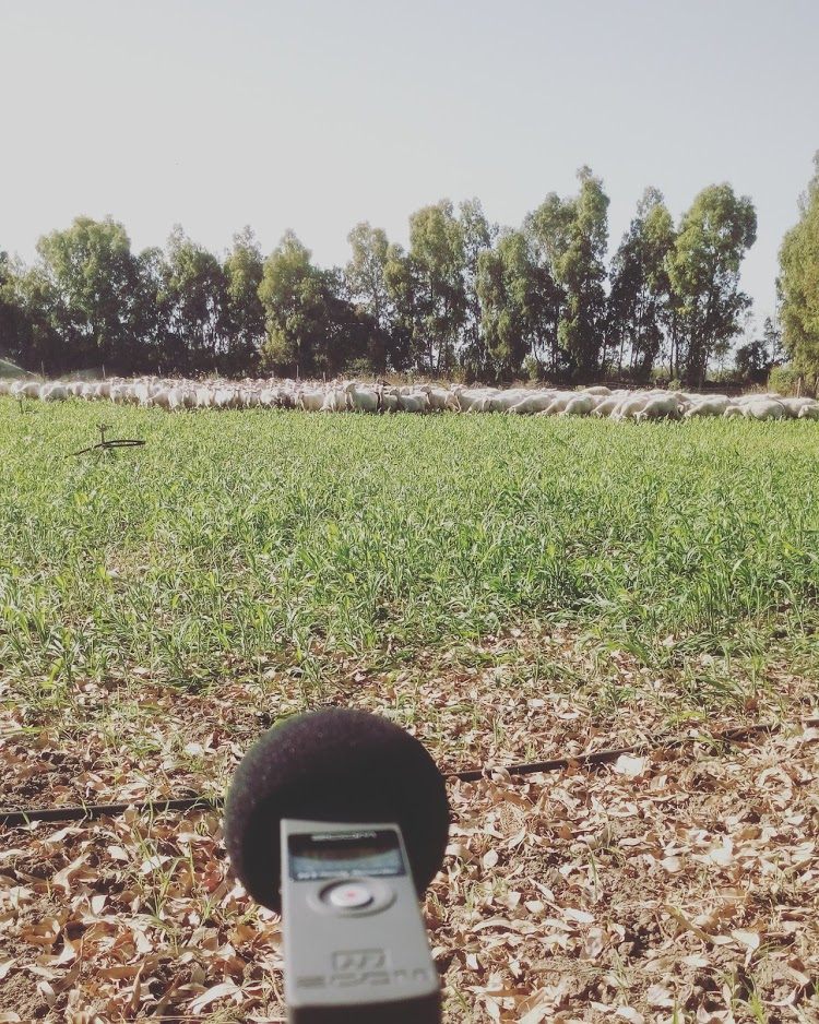 zoom h1 field recording
