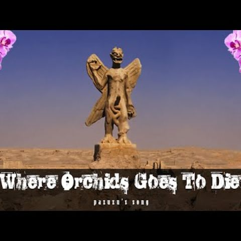 Embedded thumbnail for Where Orchids Goes To Die - Pazuzu's Song